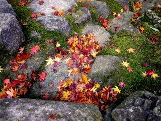 단풍잎, 이끼 그리고 돌