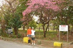 Cherry blossoms in bloom - Nago Half Marathon