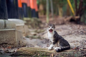 <p>I can&#39;t tell if this cat is laughing or screaming</p>
