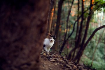 <p>A cute cat peeks out from behind a tree trunk</p>