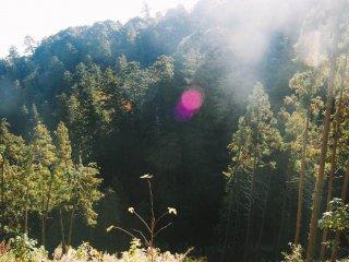 Pemandangan pepohonan pinus yang segar ini juga akan menemani petualangan Anda menuju puncak Takaosan.