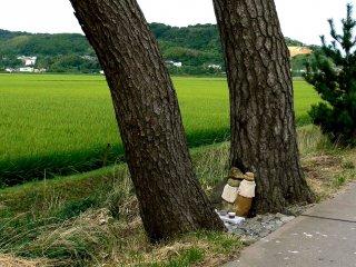 Cặp tượng Ojizo dưới cây thông