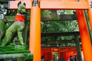 Patung kitsune atau rubah yang dipercaya sebagai pengantar Dewa Beras/Inari