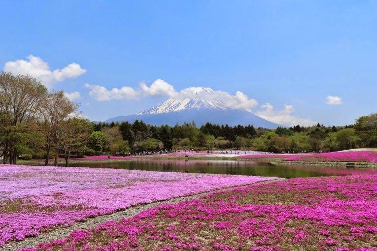ดอกไม้ของญี่ปุ่น ในเดือนพฤษภาคม