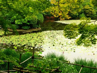 'Kyoyochi Pond'...I visited in June, when the fresh green was beautiful, and I found pretty water lilies instead of irises, which would bloom later