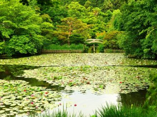As a playground of mandarin ducks, this pond used to be more famous than the now renowned 'Rock Garden' of Ryoan-ji Temple. On the left is Benten-jima (island)