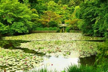 Ryoanji: Temple of Dragon at Peace
