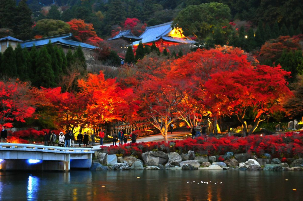 Along the approach from the mountain gate to the two-storied pagoda, the trees are already illuminated a fiery red