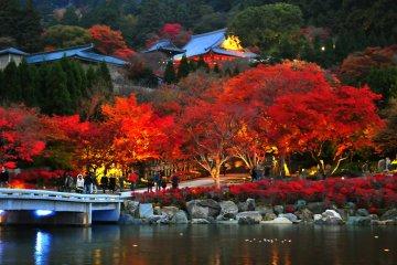 <p>산에 위치한 대문에서 2층 사찰탑으로 다가갈수록 나무들이 벌써 다양한 채색의 붉은 색으로 물든 것을 볼 수 있다.</p>
