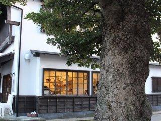 樹齢100年を超える椨(たぶ)の木。かつては造船には欠かせない樹木であった。樹皮がでこぼこなので庭木としてはあまり人気がないという