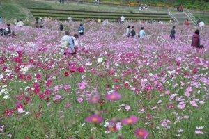ผู้คนและดอกไม้