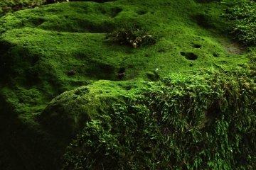 Сад в Анракудзи посреди рисового поля