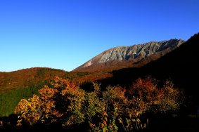 錦秋の大山とブナ林