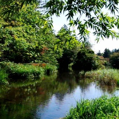 軽井沢 雲場池をのんびり散歩