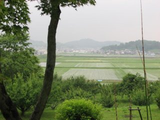 Looking out onto the rice fields