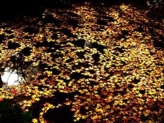 弁天池に浮いた落ち葉も一景の絵画だ