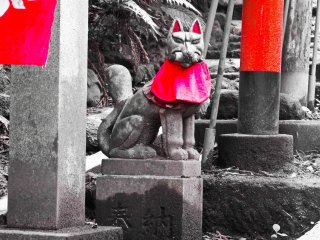 Sasuke Inari Shrine is famous for its inari. Although the general translation means white fox, Inari have been worshipped for centuries as a spiritual messenger as well as the Shinto god of fertility, rice, tea, sake and agriculture amongst many other things
