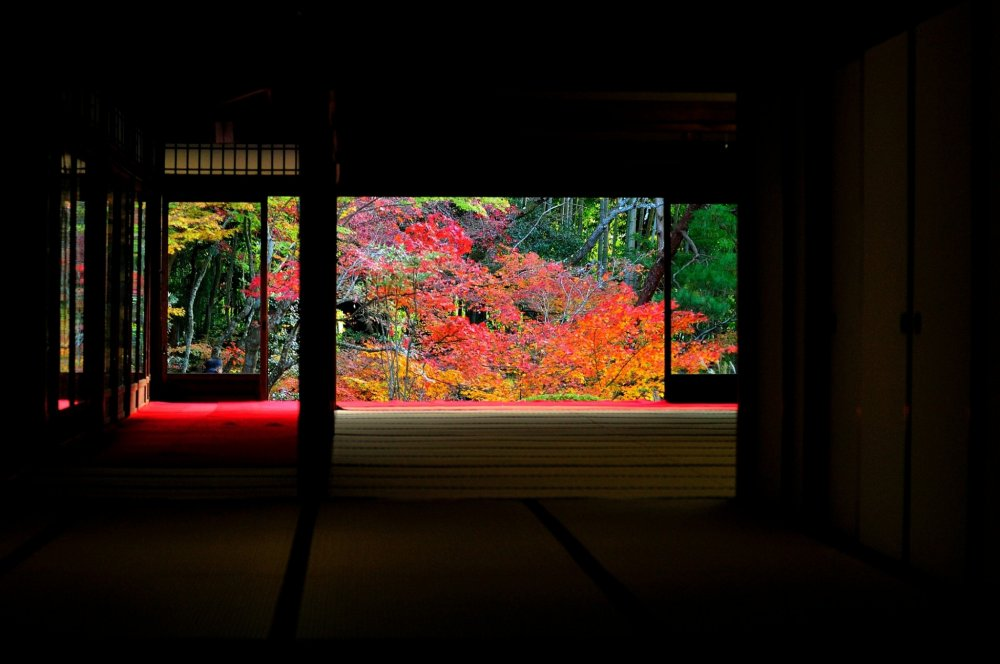 The autumn leaves seen from one of the buildings of Nanzenji Temple, 'Tenju-an', looks like a piece of art in a frame