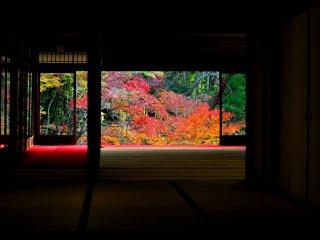 "Вид на осенние листья из одного из здания храма Нанзендзи ""Тендзю-ан"" выглядит, словно картина в раме"