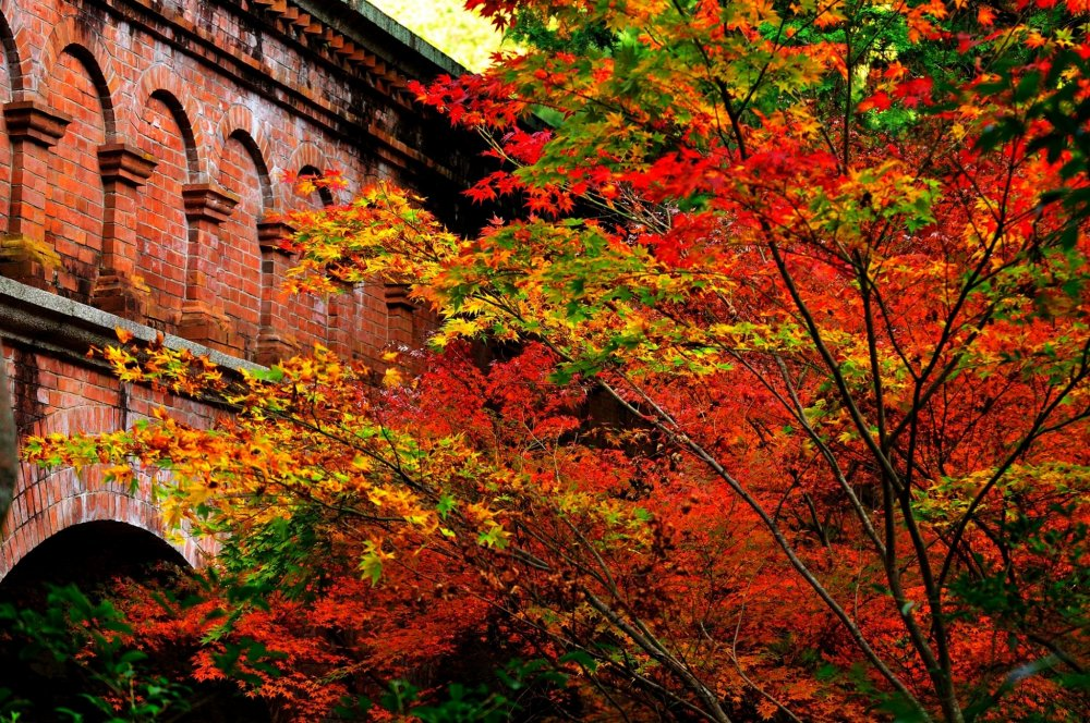 Brilliant red maple trees add radiance to the red brick building...how gorgeous!
