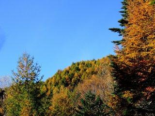 青空と空気の冷たさがより鮮やかに見せる