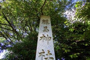 藤島神社石柱に覆いかぶさる高木