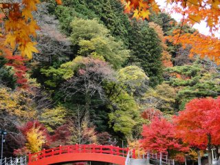 Tengah hingga akhir November adalah saat-saat terbaik untuk berjalan-jalan menikmati puncak kecantikan taman