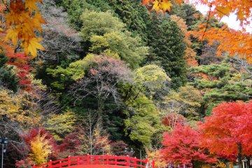 <p>11월 중하순은 단풍을 제대로 즐길 수 있는 시기입니다.</p>