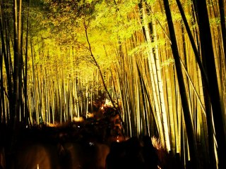 I'd never seen so many people flocked together on the pathway through the bamboo grove of Sagano at night
