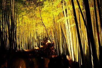 Kyoto Arashiyama Lantern Street