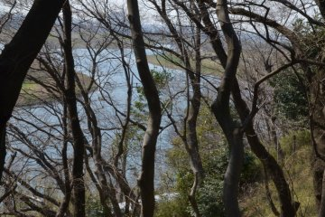 The Tama River coursing from behind the wood