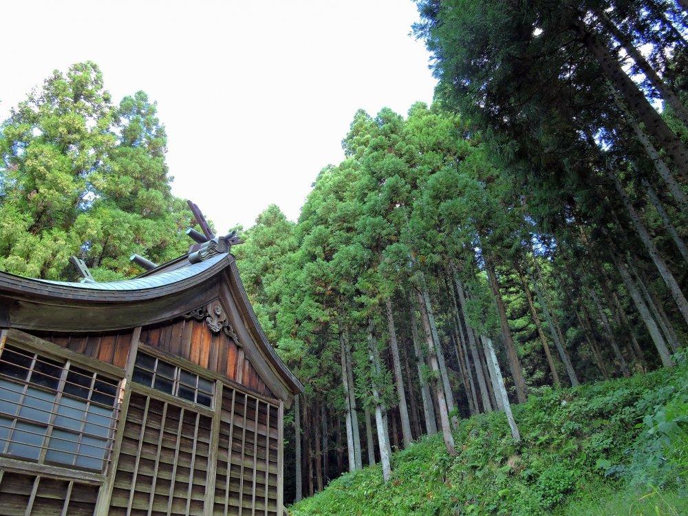 聳え建つ杉林に囲まれた本殿