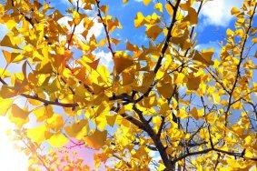 Краски осени в парке отдыха Фукуи