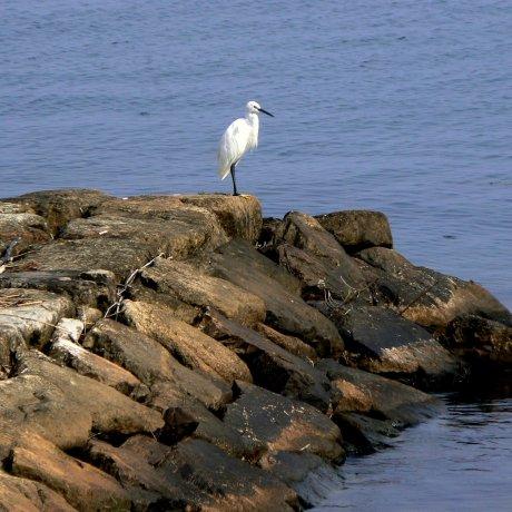 Bird Watching around Lake Biwa