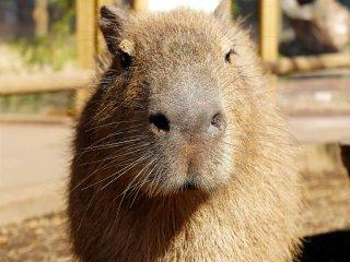 Anh chàng cực ngầu này đến chào hỏi và xem chuyện gì đang xảy ra, những con vật không nhút nhát và họ sẽ đến gặp bạn và bạn cũng có thể cho chúng ăn thức ăn khác nhau.