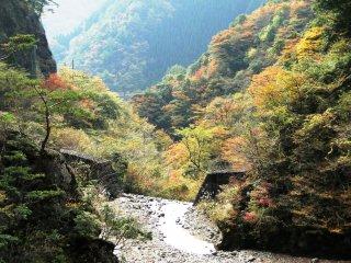 우메노키토도로키 공원의 현수교