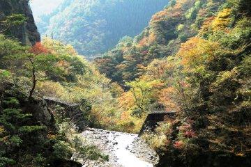 <p>우메노키토도로키 공원의 현수교</p>