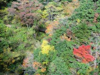 다리 가까이에 가을 단풍으로 물든 풍경이 매우 아름다웠다.