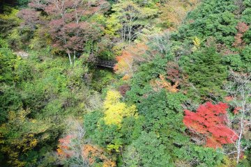 <p>The foliage near the bridge in autumn is spectacular</p>