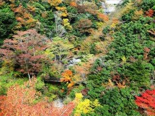 가을 단풍을 구경하기에 제일 좋은 때는 11월 초즈음이다.