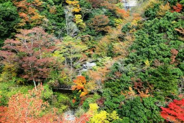 <p>Early November is the best time to visit the area to see the autumn leaves</p>