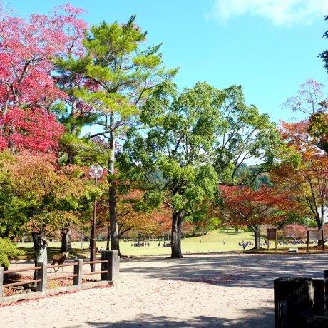 Công viên Nara vào mùa thu