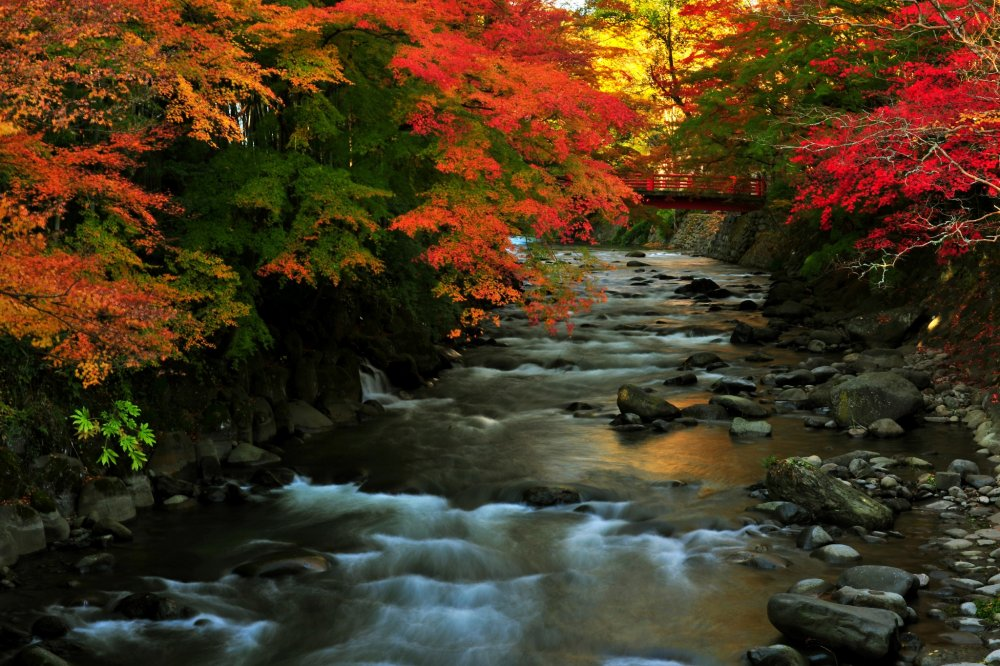 The river flows through a tunnel of autumn leaves!
