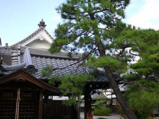 Một cây thông tựa vào mái đền ở khu vực rửa tay