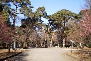 Omiya Park Trees.