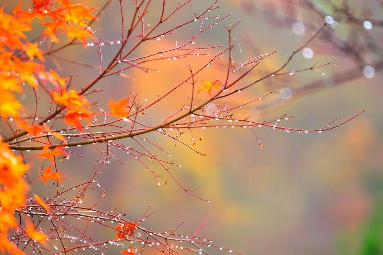 Lá thu dưới mưa