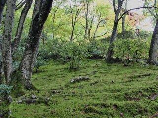 本堂へ上がる途中の斜面には秋であるにもかかわらず苔が青々と輝いている