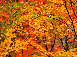 Lively colors decorate the short autumn