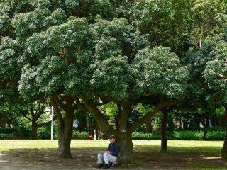 แต่สวนก็เงียบสงบพอสำหรับจิตรกรและผู้คนอื่นๆ สำหรับมานั่งกินลมชมวิวเงียบๆ
