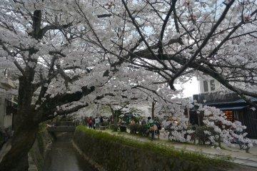 12 Hal Yang Bisa Dilakukan di Kyoto